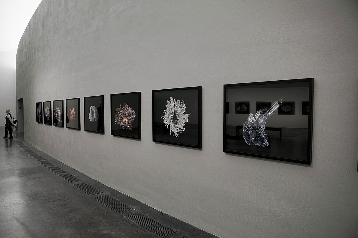 Exhibition view, 5th floor, photographs from the series Excess and Ascesis, 2010