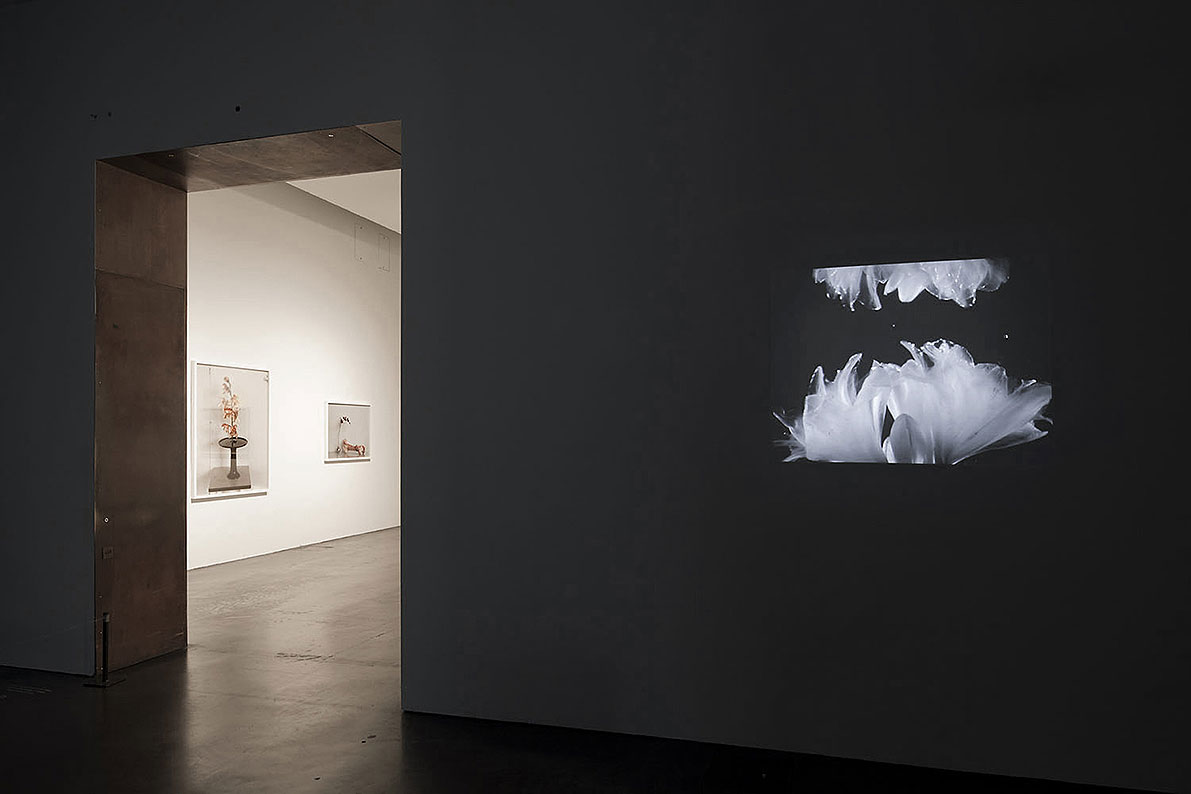 installation view, Man Before A Mirror
