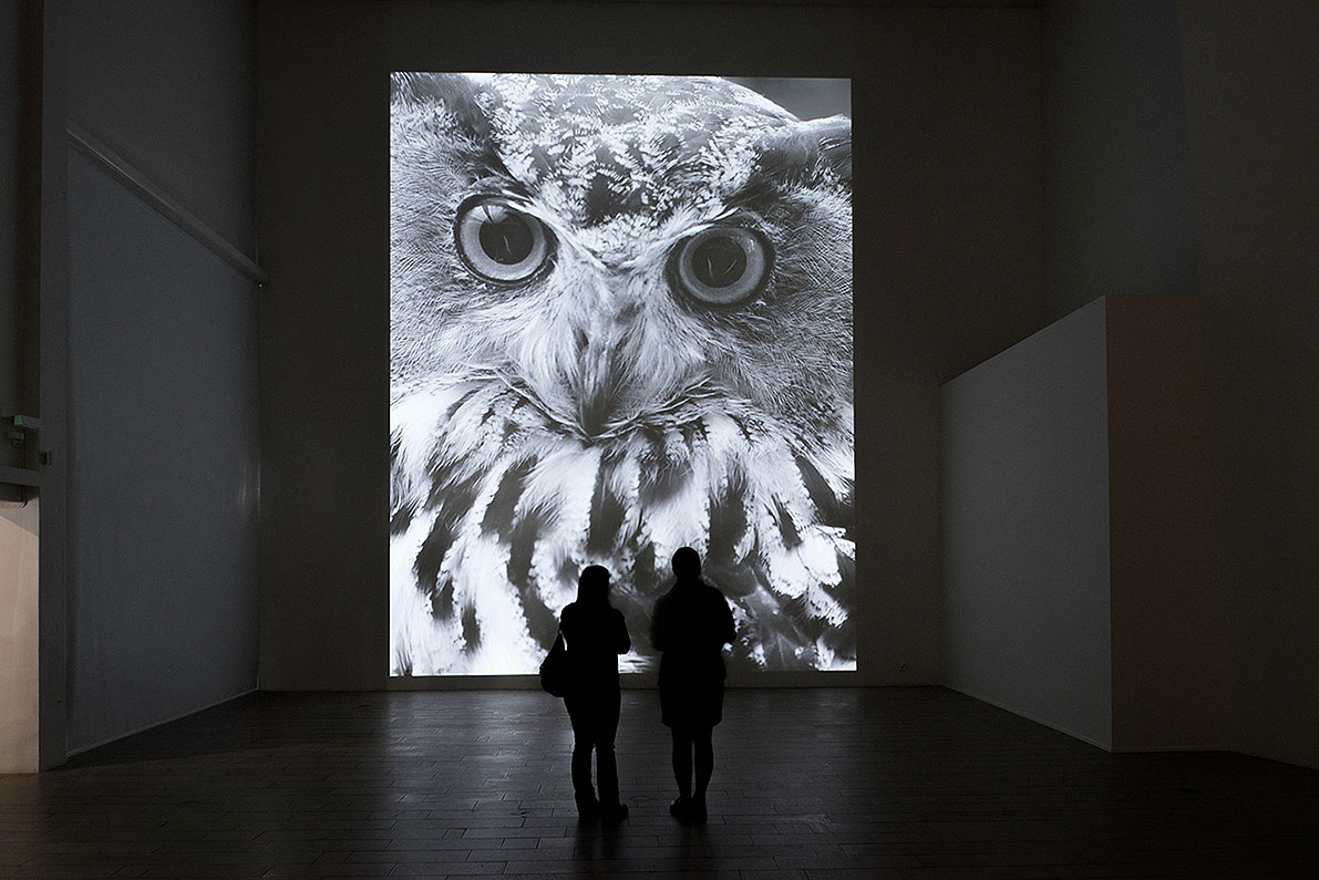 Observatory, video installation, taxidermied owls, sound, video projection: duration: 10 min. 05 sec., height 8 m x width 6 m
