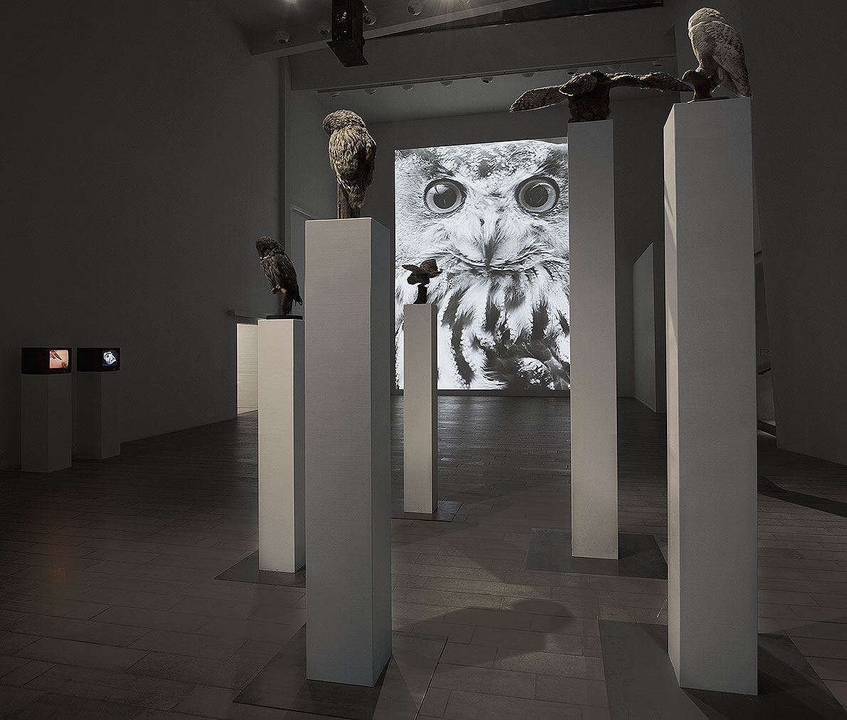 Observatory, video installation, taxidermied owls, sound