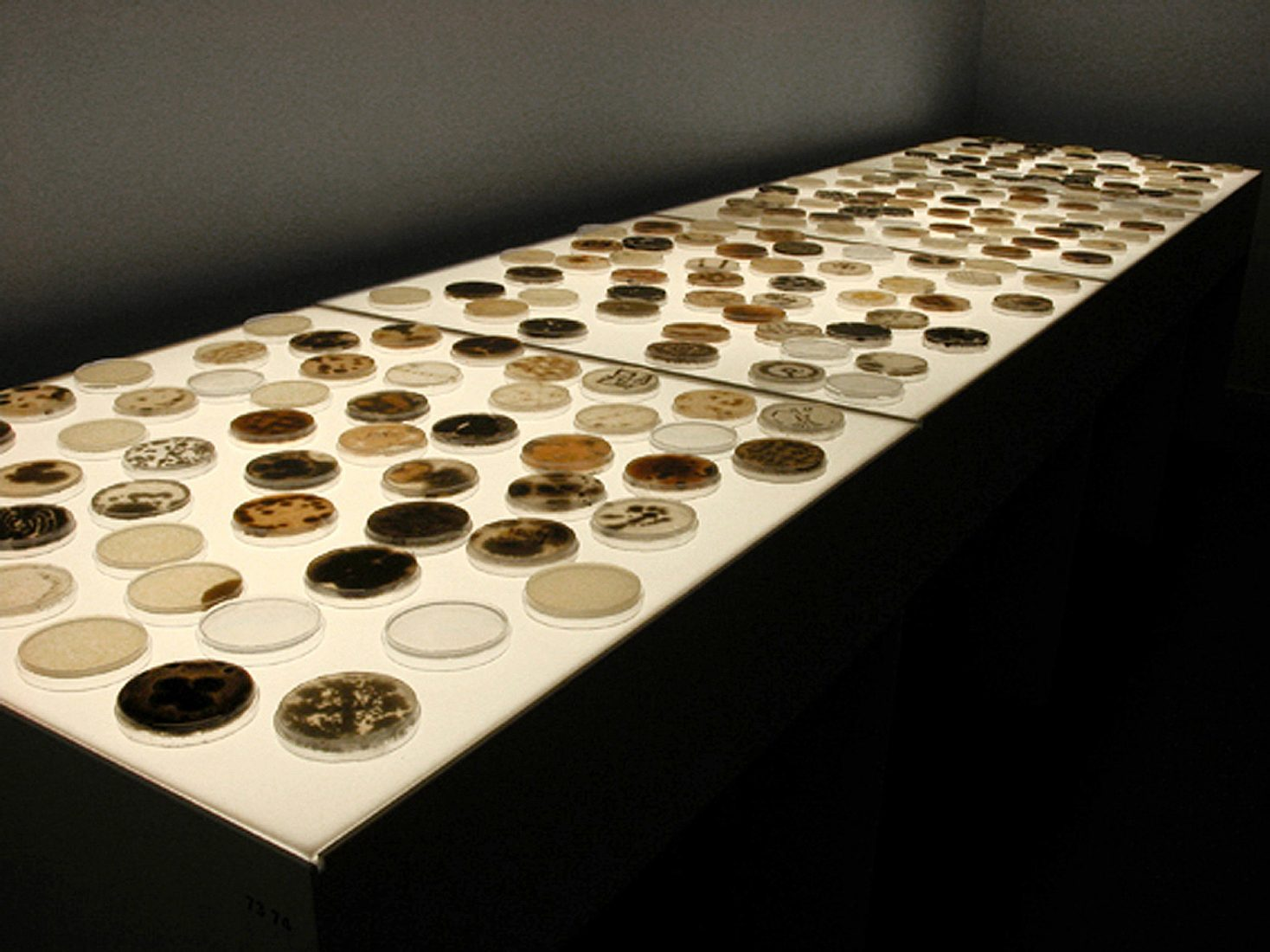 Light table with petri dishes, mould and bacteria