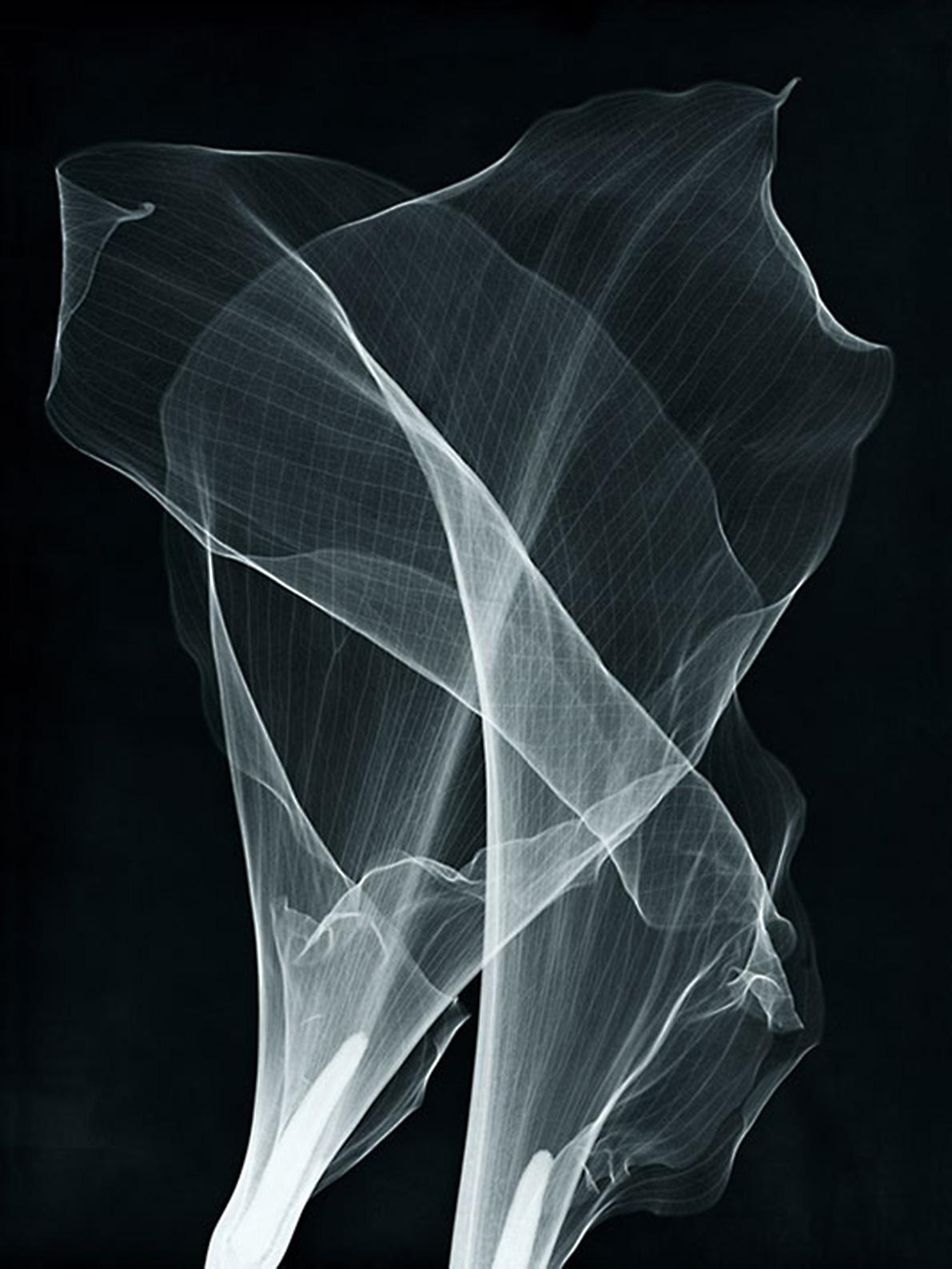 x-rays of callas
